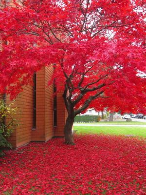 Najpiękniejsze Drzewa Ozdobne W Ogrodzie Nazwy Ze Zdjęciami