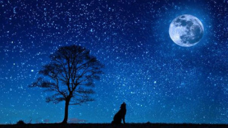 miért csillag az álomférgekben)